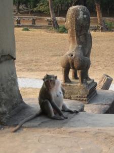 Macaco andando tranquilamente pelo templo