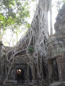 Mais uma das árvores fantásticas de Ta Prohm