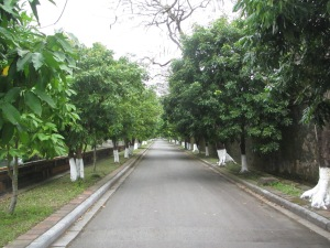 Rua arborizada da Cidade Imperial