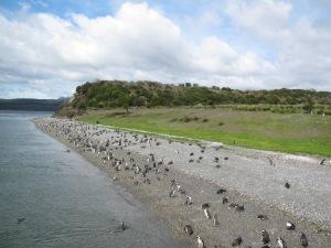 A ilha dos pinguins