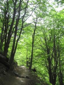 Parte da trilha que passa por bosques de lenga