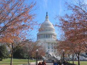 As lindas árvores do outono em Washington, com o Capitólio ao fundo