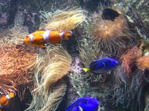 Peixinhos no Aquarium